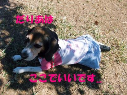 コピー ~ DSCF2268