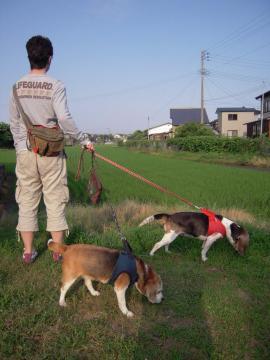 roobell-tanbomichi.jpg