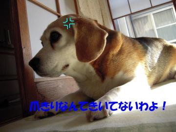 rookie-okanmuri.jpg