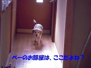rookie-omimai01.jpg