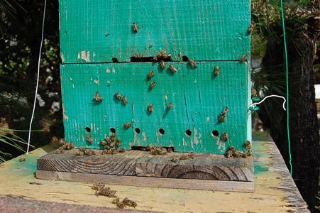 分蜂した巣箱(分蜂後)