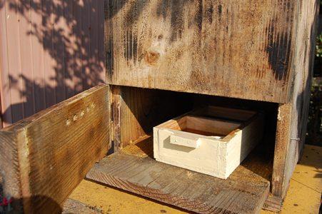 日本ミツバチ給餌