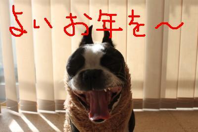1_20091230230708.jpg