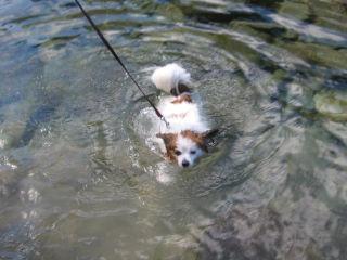 パピ泳ぐ2