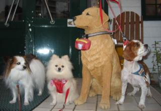 看板犬4匹?