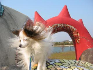 あったかいんだけど風がすごかった・・.jpg