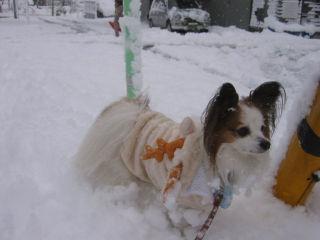 パピ・・雪だぁ