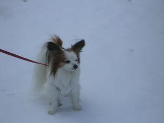 雪の中のパピ