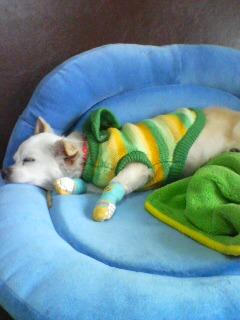のびのびと寝るクルミちゃん
