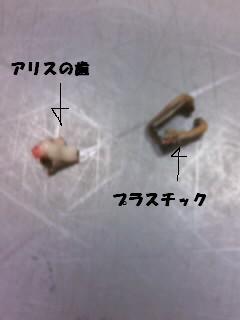 アリスの歯070306_1807~02