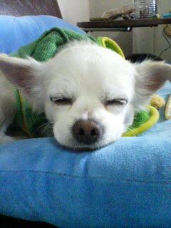 20070307クルミちゃん寝ています