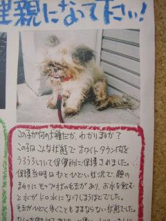 20061127がんちゃん