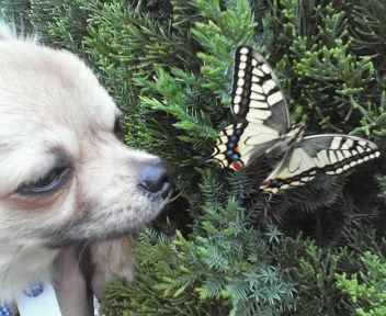 img10きのこっちと蝶