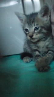 子猫トラ.jpg