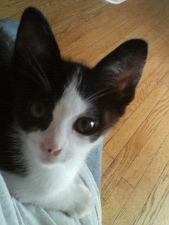 子猫ちゃんもうすぐ4ヶ月