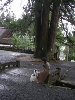 戸隠の3本杉.jpg