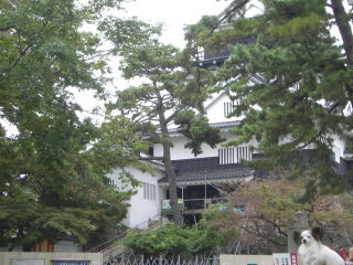 改築中の岡崎公園