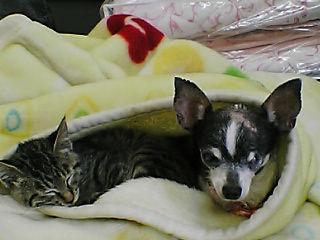 マロンちゃんと子猫