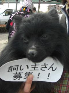 黒ポメ1.jpg