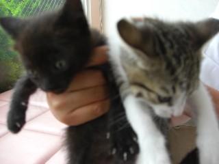 小猫2匹1