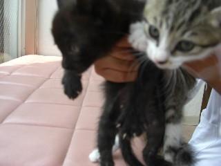 小猫2匹3