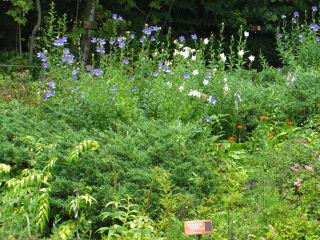 湿性花園.jpg