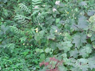 湿性花園4