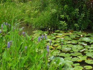 箱根湿生花園1