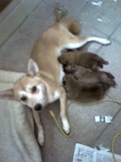 サラダさんと子犬