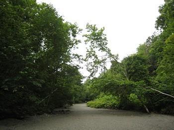 苔の洞門への道