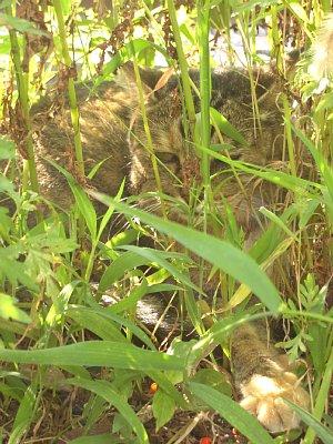 草陰でひと休み