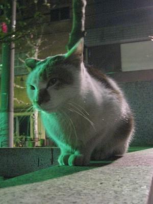 ライトアップ猫