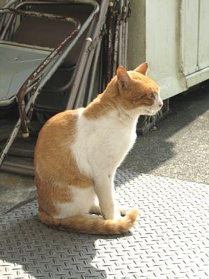 中井PAの猫