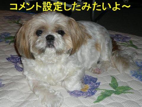 bibi_20080919_1