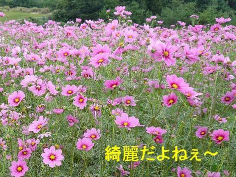 hana_20080917_3