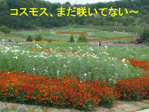 hana_20080917_1