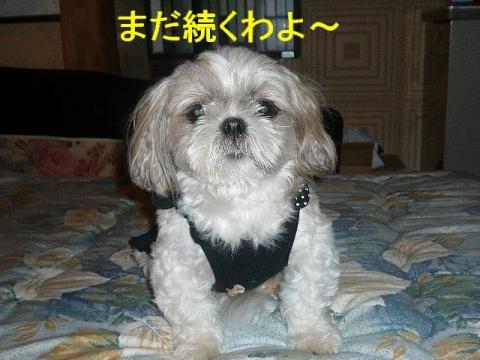 mint_20080916_4