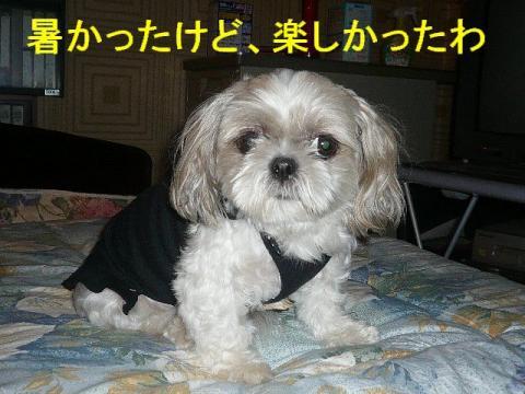 mint_20080917_1