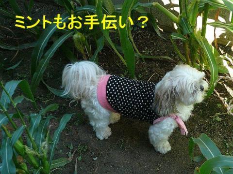 mint_20080922_1