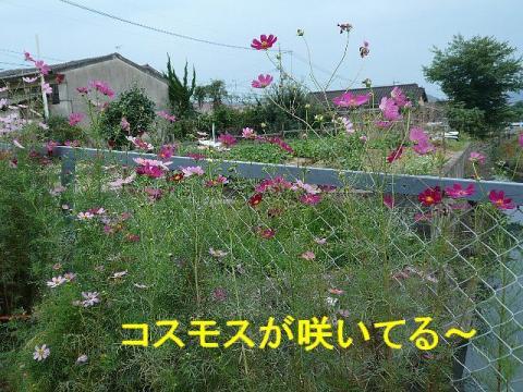 hana_20080923_2