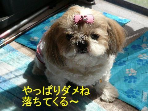 love_20080930_13