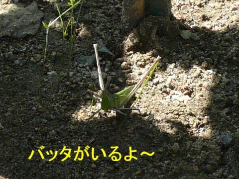 musi_20080929_1
