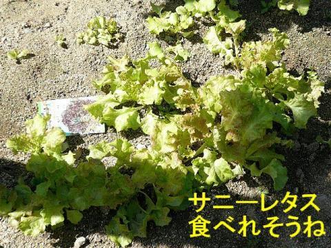 yasai_20080929_1