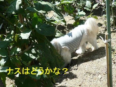 yasai_20080929_2