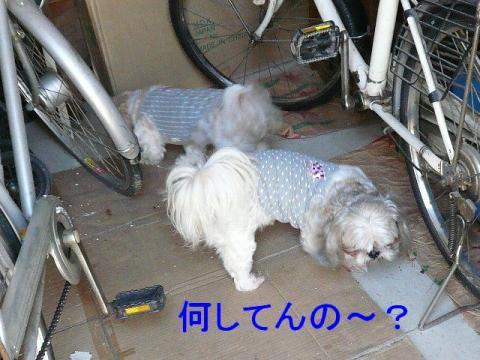 lovemint_20080930_1