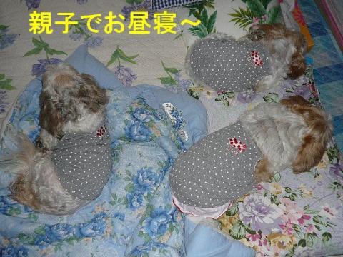 oyako_2080928_3