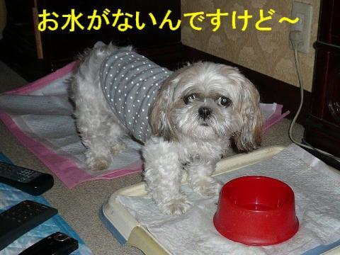 mint_20081006_3