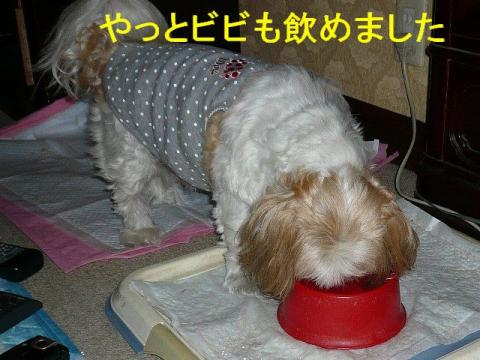 bibi_20081006_3