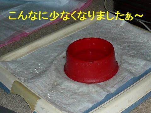 mizu_20081006_1