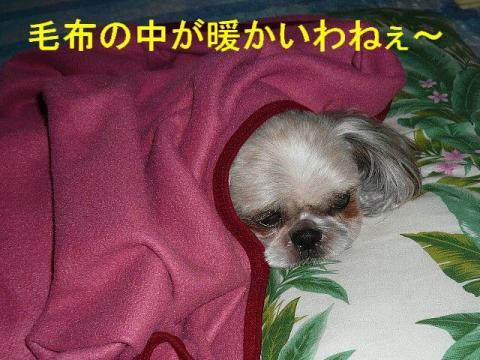love_20081005_2